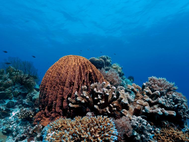 トゥバタハ岩礁海中公園